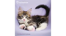 2017 Rachael Hale Cats Wall Calendar (DDD583_17) (Item # DDD583_17)