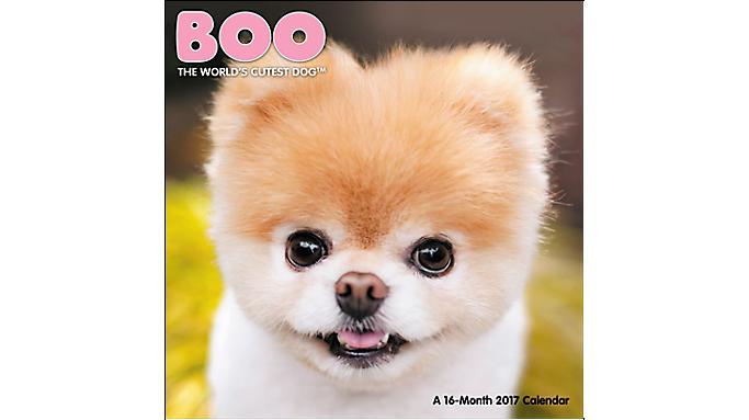 Day Dream® 2017 BOO The World's Cutest Dog™ Mini Wall ...