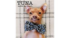 2017 Tuna Melts My Heart Wall Calendar (DDW142_17) (Item # DDW142_17)