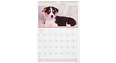 2016 Recycled Puppies Monthly Wall Calendar (DMW167_16) (Item # DMW167_16)